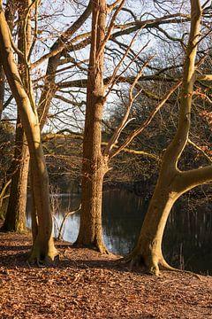 bomen langs de oever van een water van Compuinfoto .