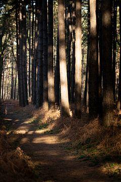 Das Geheimnis des Waldes im Winter von Rene  den Engelsman