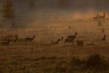 rotwild in the morning fog von Peter Karels
