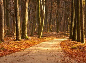 Herfstkleuren in het bos van Michel Knikker