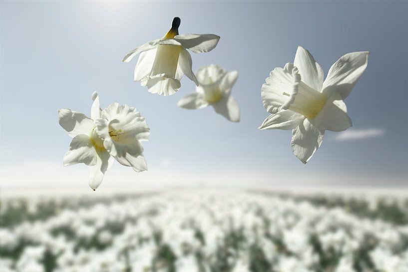 Le pouvoir des fleurs - Mount Hood sur Claire Droppert