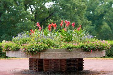 blühende Blumen im Stadtpark Rotehorn in Magdeburg von Heiko Kueverling