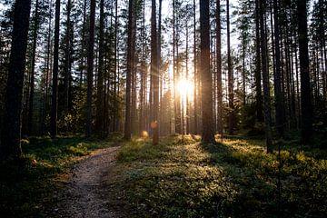 Goeiemorgen bossen van Ellis Peeters