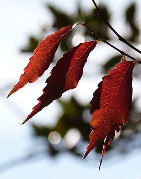Herfst 1 von Jonathan Kremer