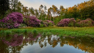 Rododendrons aan een begroeid meer van Jenco van Zalk