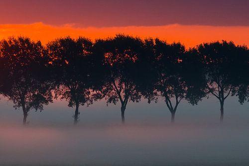 bomenrij in de mist van