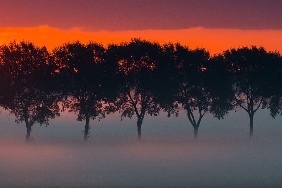 bomenrij in de mist