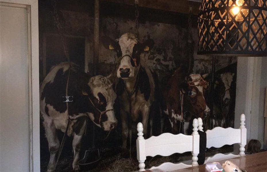 Klantfoto: Koeien in oude koeienstal van Inge Jansen, op behang