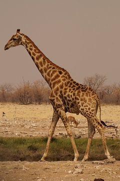 Giraffe op de steppe van Erna Haarsma-Hoogterp