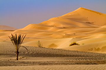 Zandduin in de Sahara van Easycopters