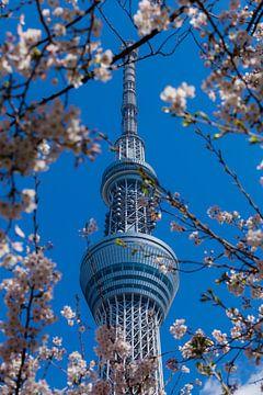 Tokyo Sky Tree von Schram Fotografie