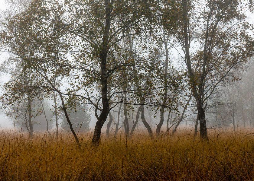 Autumn Birches van William Mevissen