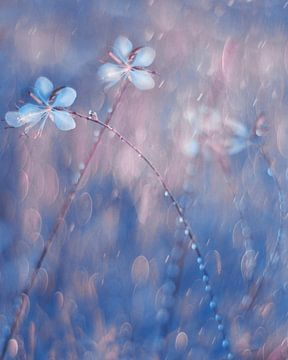 The Flower Duet, Delphine Devos von 1x