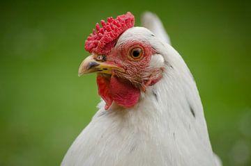 Huhn! von Sven Wildschut