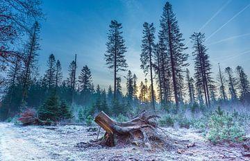 Wintermorgen im Speulderbos von Christiaan de Graaf