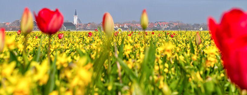 Bollenvelden rondom den Hoorn op Texel / Bulb fields around the Hoorn on Texel van Justin Sinner Pictures ( Fotograaf op Texel)