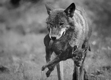 Wolf met jong von Eveline Lenderink