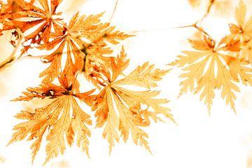 Gold Leafing von