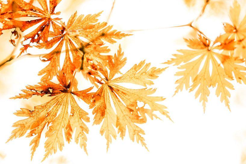 Gold Leafing van Cho Tang