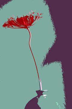 Dill, grafisch dargestellt von Affect Fotografie
