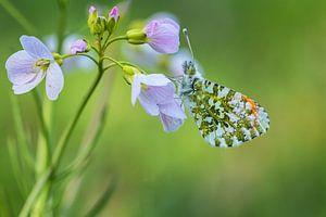 Vlindertje zo mooi....