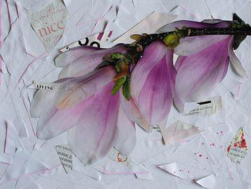 Magnolien von Nora Bland