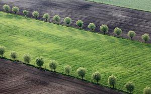 Dubbele bomenrij