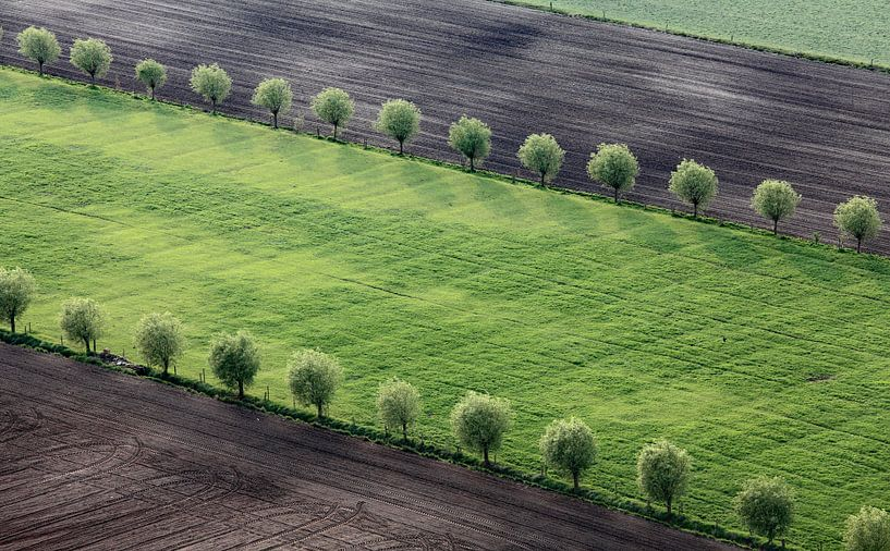Dubbele bomenrij  van Ludo Verhoeven