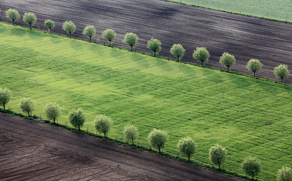 Dubbele bomenrij  von Ludo Verhoeven