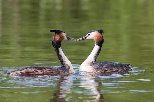 Love is in the air! sur