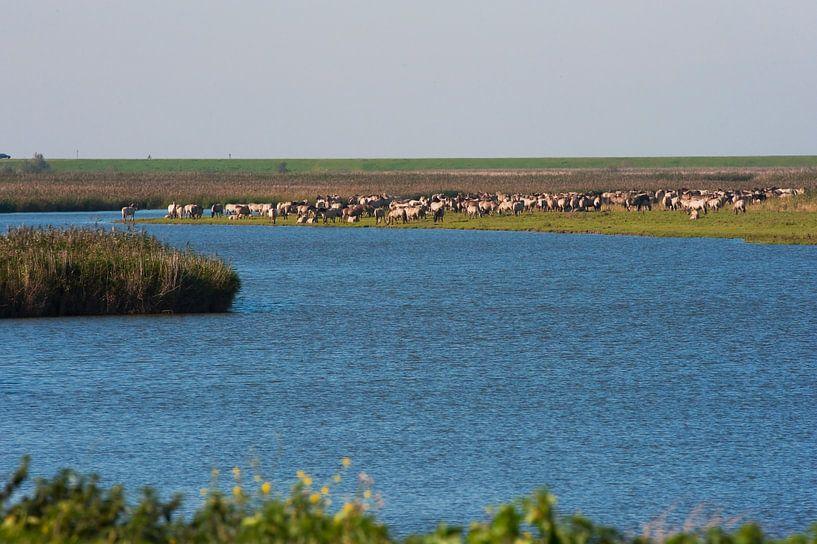 Oostvaardersplassen mit der Paardenkudde noch in ihrer Gesamtheit am Wasser. von Brian Morgan