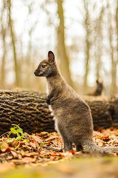 Zo groot! van Tierfotografie.Harz
