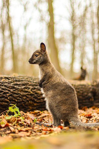 So groß! von Tierfotografie.Harz