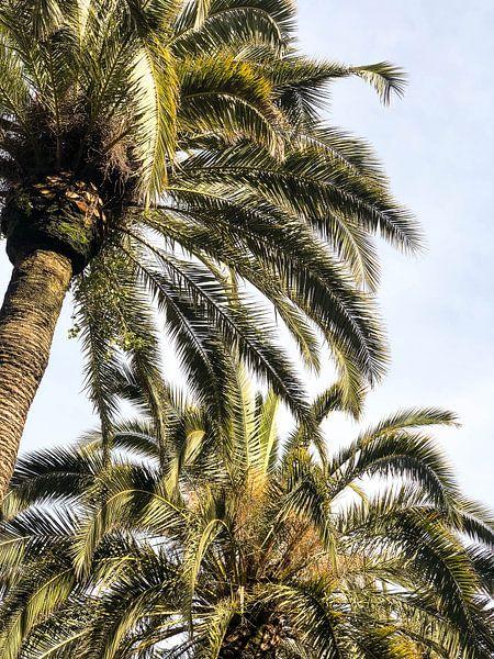 Palm Me In van Judith Abrahams