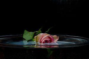 Treurroos te water