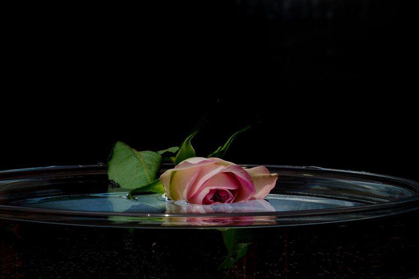 Treurroos te water van Nora Verhoef