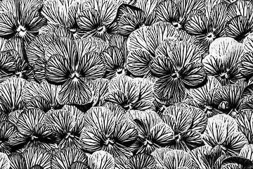 gestreepte viooltjes (foto in zwart wit)