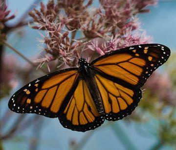 Monarch Vlinder van Ingrid Ronde