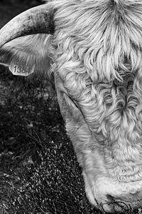 Schotse Hooglander zwart wit I van Robin Davina