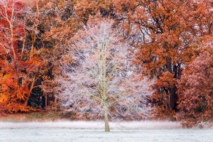 Rijp in het herfstbos, Utrechtse Heuvelrug, Nederland van Sjaak den Breeje