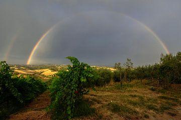Regenboog en druiven - Toscane - Italie von Jeroen(JAC) de Jong