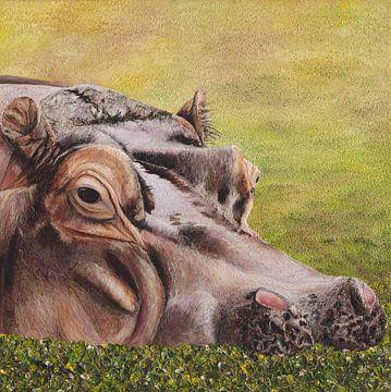 Flusspferd ( Flusspferd ) von Russell Hinckley