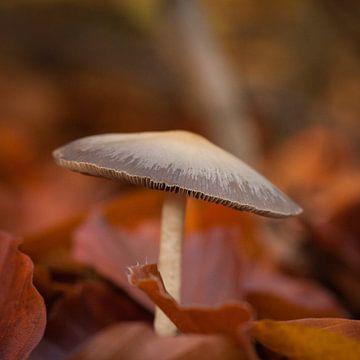 paddenstoel van Arjan Benders