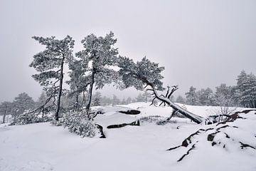De winterdag in bergen in Zweden van