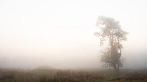 Einsamer Baum. #2 von Lex Schulte