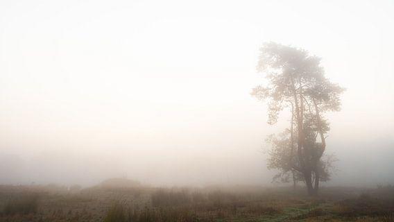 Eenzame boom. #2 van Lex Schulte