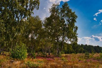 De kleuren van het landschap de Weerterheide van JM de Jong-Jansen
