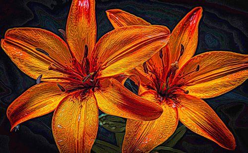 Twee oranje gevlamde lelies met regendruppels