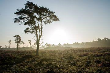 Leuvenumse Bossen savanne  van Maurice Verschuur