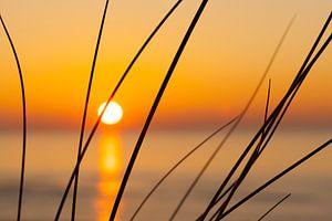 sunset and grass, helmgras en zonsondergang